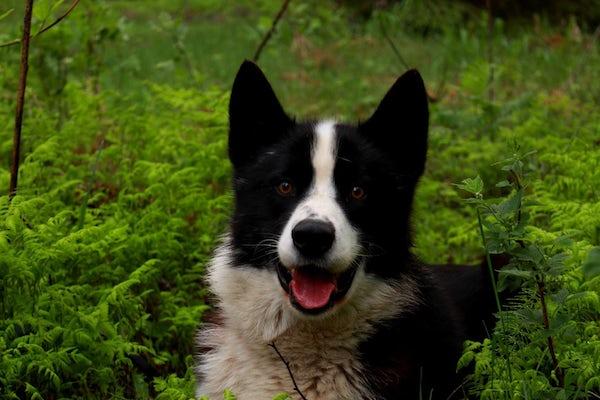 Aktiv & inspirerande hundhelg i Storlien