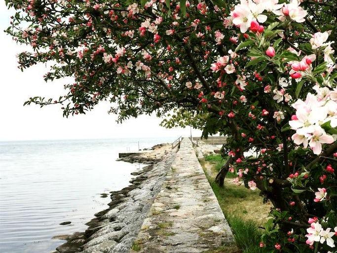 Möt våren i Äppelriket på Österlen