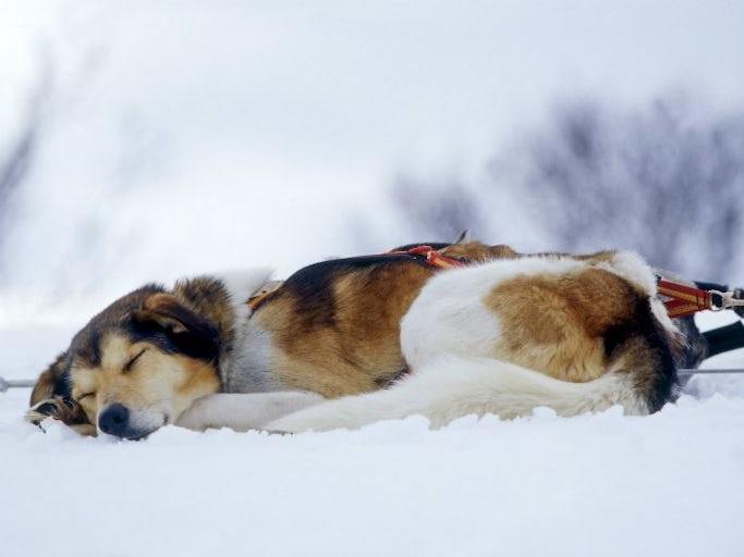 Tyst nyårsfirande med hund i Navardalen
