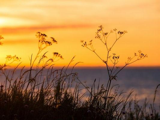 Naturdagar på Öland - 3 dagar