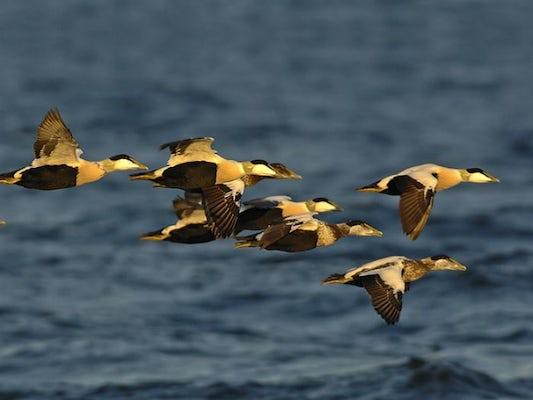 Höstfåglar - Österlen och Falsterbo