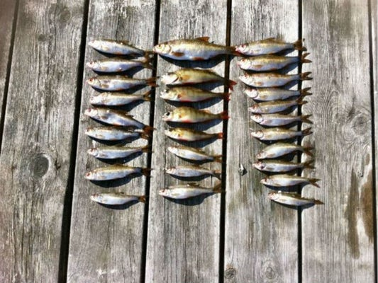 Fiskepaket på Ivösjön