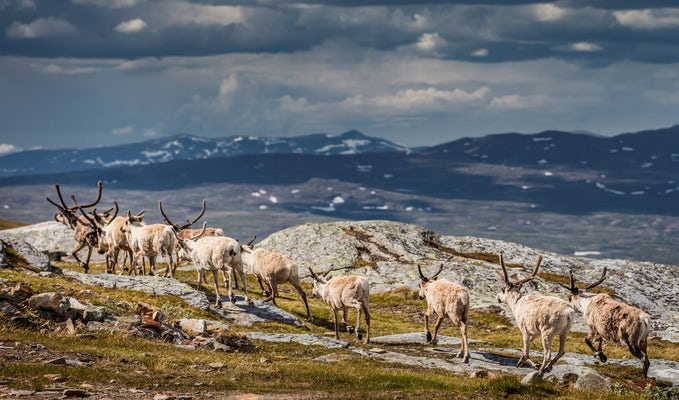 Nationalparkstur i Laponia, midnattssolsvandring